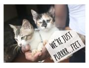 Were just Purrrrfect-min